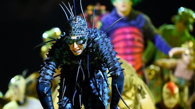 OVO: Dans l'univers captivant des insectes