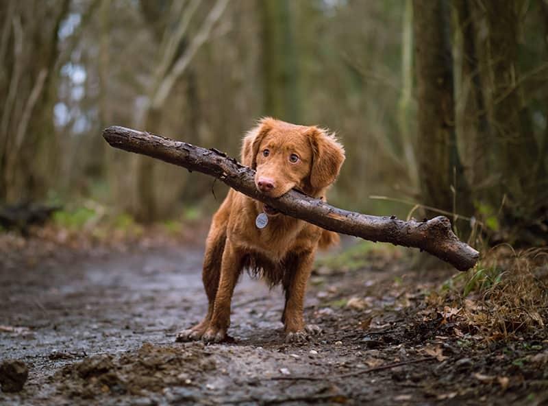 randonnée chien
