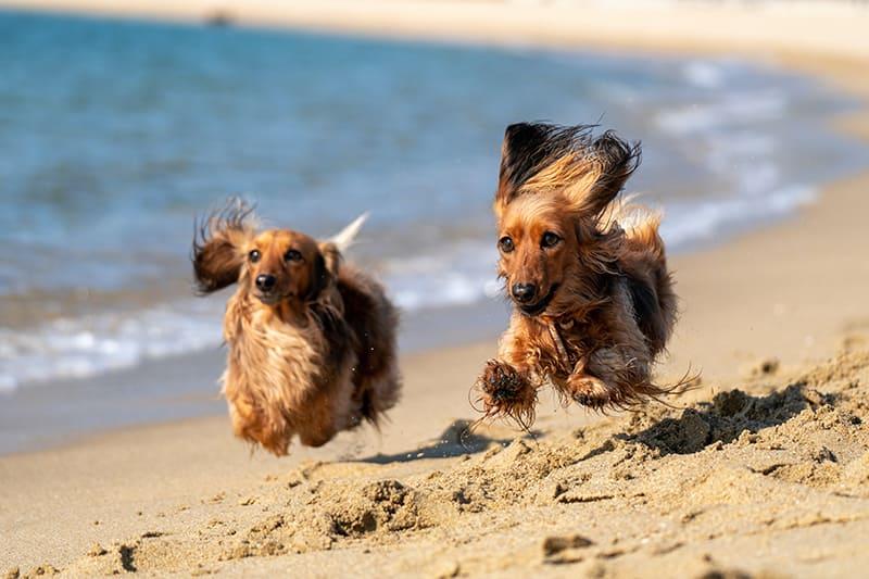 chiens plage