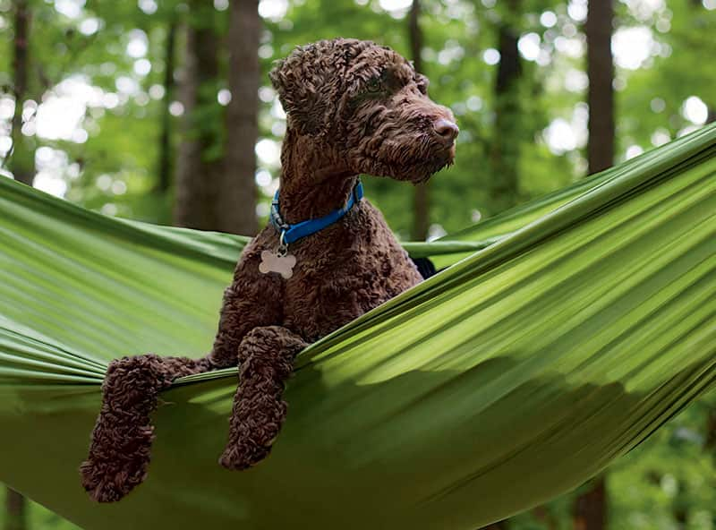 chien camping