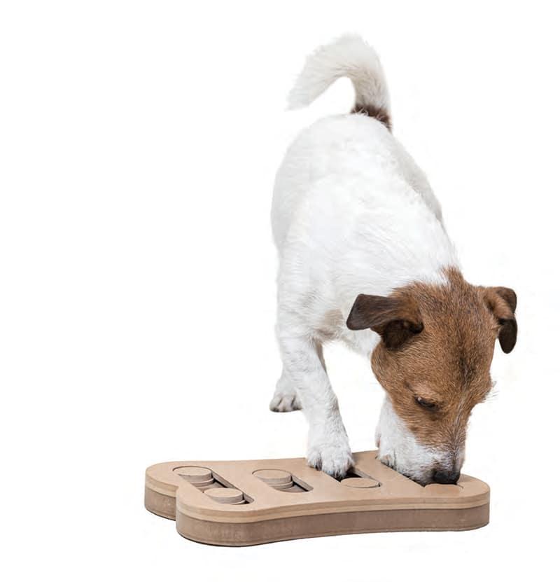 chien flair