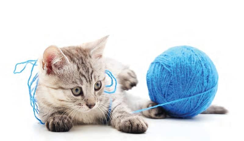 chat laine