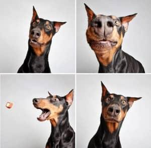 chiens-photomaton-1