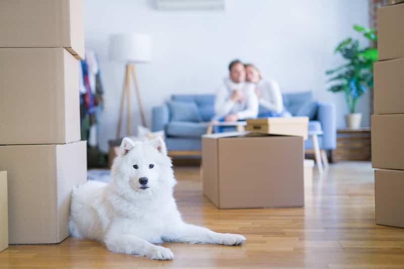 chien déménagement