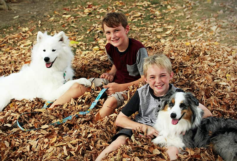 chiens feuilles