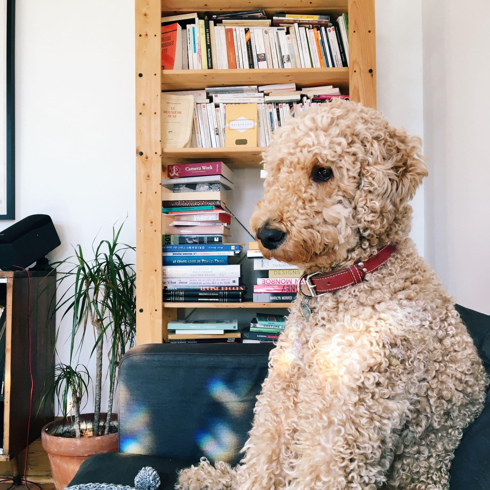 Animaux de compagnie Paul chien