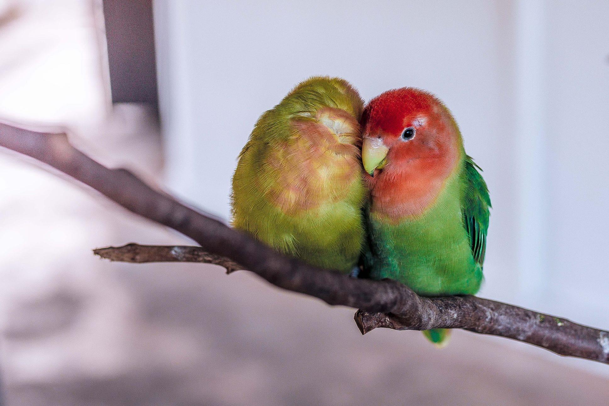 Coût animal de compagnie oiseaux