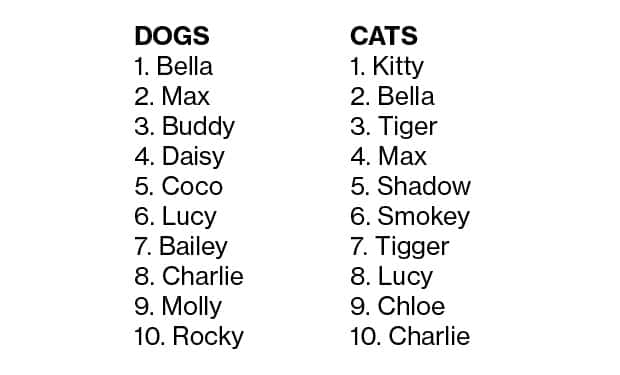 Top 10 pet names for 2013