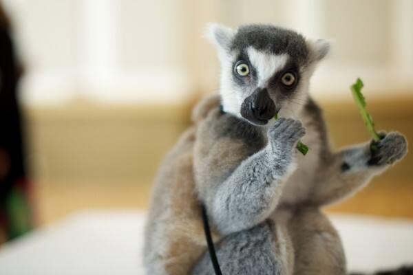 Lemur Ontario Science Centre