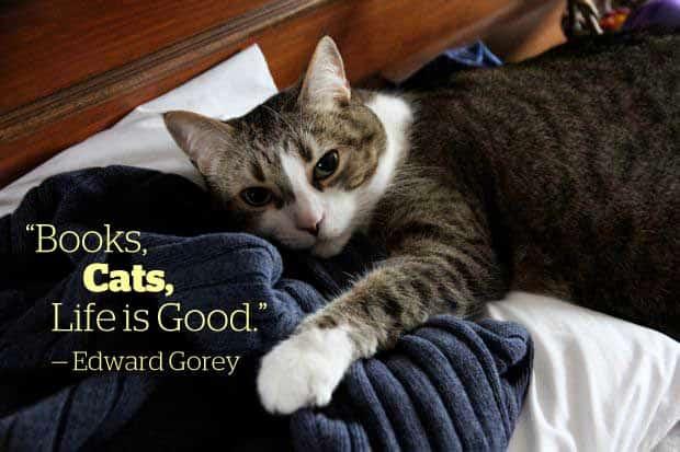 cat edward gorey quote