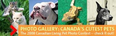 Canada's Cutest Pets