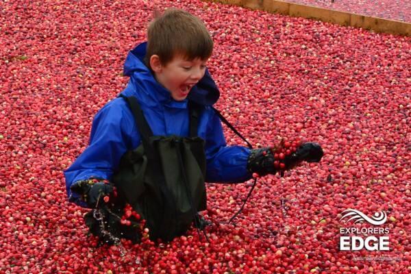 cranberry-bog