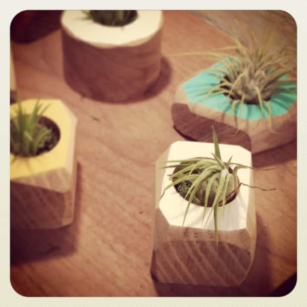 Air plants in Nugget Planters.