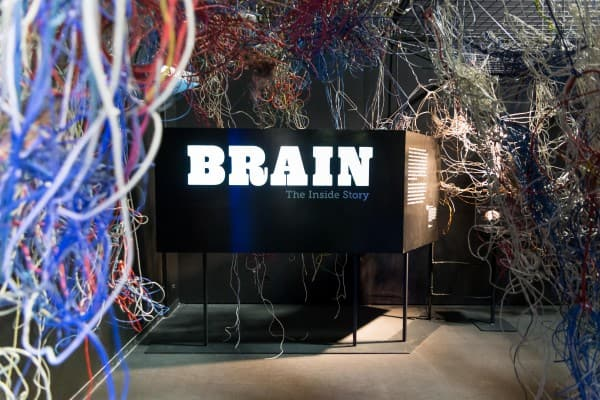 Brain: The Inside Story