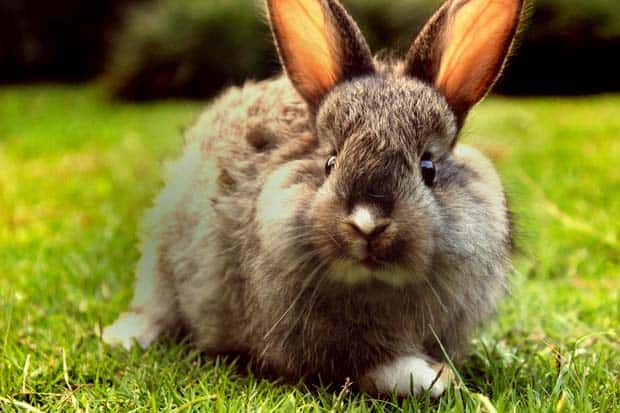 End cosmetic testing on adorable bunny rabbits.
