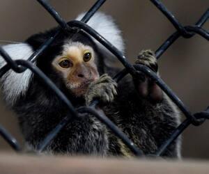 Zoo Miller à Frampton
