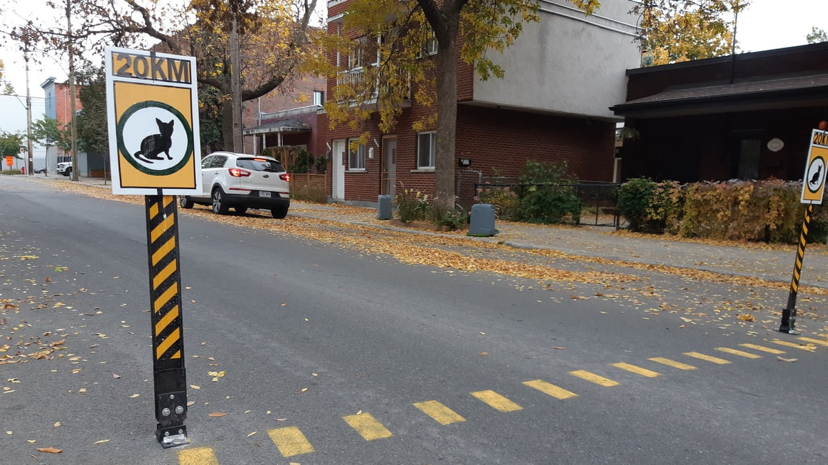 Une «traverse pour chats» dans Ville-Marie