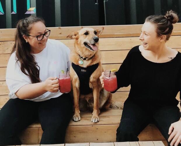 Image principale de l'article 6 terrasses à Montréal qui acceptent les chiens