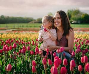 Image principale de l'article Un million de tulipes sont prêtes à être cueillies