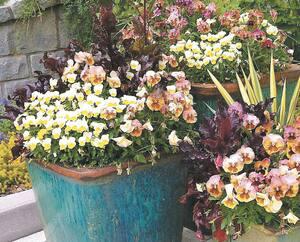 CASA 0425 Fleurs et potager