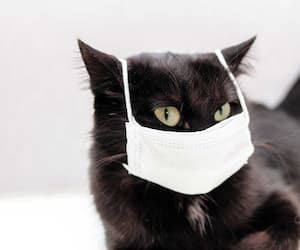 black cat in protective medical mask