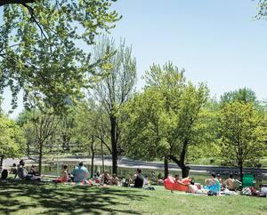Dans plusieurs parcs de Montréal et aux alentours, la situation se détériore. Il faut que la mairesse agisse.