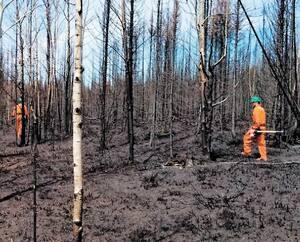 Des pompiers forestiers ratissent des secteurs où les flammes ont tout rasé sur leur passage, excepté les troncs d'arbres calcinés qui tiennent toujours. L'incendie dépasse la superficie de l'île de Montréal.