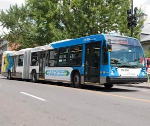 STM : les autobus articulés arrivent en ville