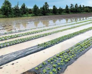 Les champs inondés du Potager Fleuri du Lac.