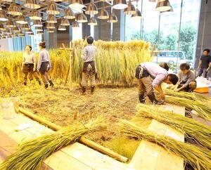 Une section de l'édifice Pasona Urban Farm est entièrement consacrée à la culture du riz.