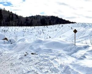 Le régisseur des forêts de la Seigneurie de Beaupré, Jacques Laliberté, nous a fait parvenir cette photo démontrant comment des gens sans scrupule qui sortent des sentiers partout, où bon leur semble, peuvent détruire. Ici, la tête de plusieurs petits arbres a été cassée dans cette plantation qui représentait l'avenir de la foresterie dans ce secteur.