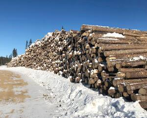 coupes forestières