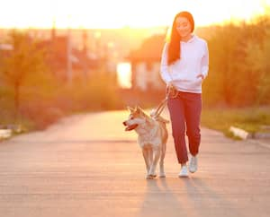 Young woman walking her adorable Akita Inu dog outdoors