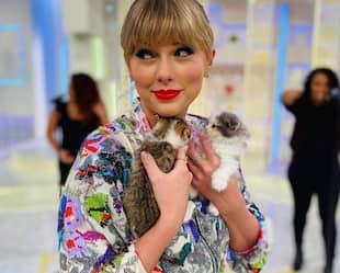 Image principale de l'article Les femmes à chats : creuser sous les préjugés