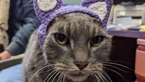 Image principale de l'article Elle tricote des oreilles pour un chat amputé