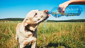 Image principale de l'article Comment aider son animal en période de canicule