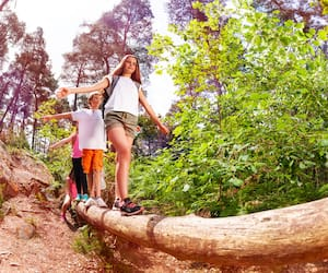Boys and girls walk on the big log in forest