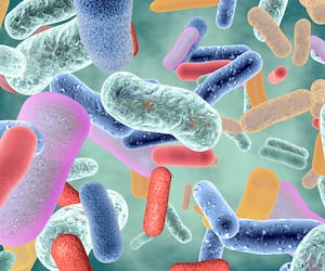 Beneficial healthy intestinal bacterium microflora 3d render.