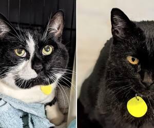 Image principale de l'article SPCA : deux chats se cherchent des familles