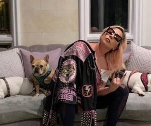 Image principale de l'article 20 célébrités habillées en «mou»