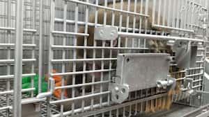 Image principale de l'article Un labo accusé d'électrocuter des pénis de singes