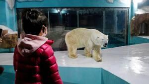 Image principale de l'article Des ours polaires dans un hôtel font scandale