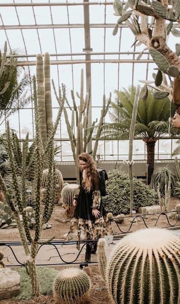 Image principale de l'article Assistez à la floraison de cette plante unique