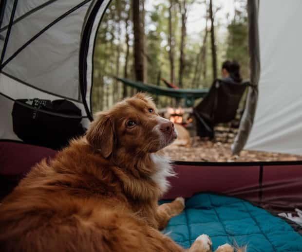Image principale de l'article 5 campings du Québec où les chiens sont acceptés