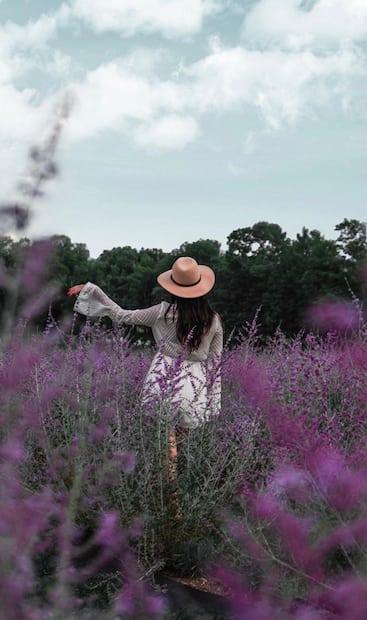 Image principale de l'article Visitez ce champ de lavande gratuitement cet été
