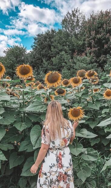 Image principale de l'article Un champ de tournesols sublime à 1 h de Montréal