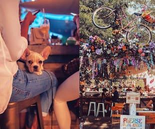 Image principale de l'article Une soirée «dog friendly» à ce marché fermier boho