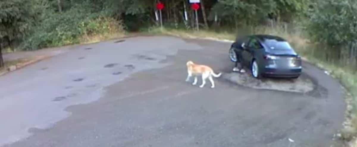 [VIDÉO] Filmée en train d'abandonner son chien dans un boisé