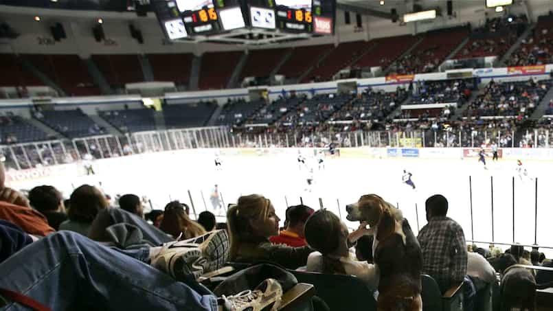 Une décision inquiétante de l'ECHL