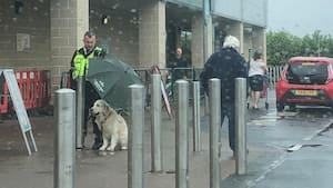 Image principale de l'article Un gardien de sécurité protège un chien
